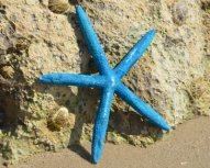 finger starfish