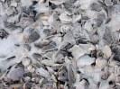 Freezing Seashells