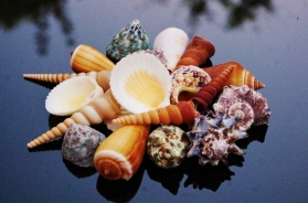 Beach Mix Medium Shells
