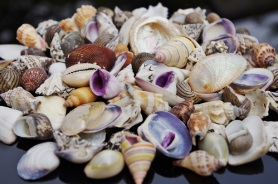 Various Small Seashells